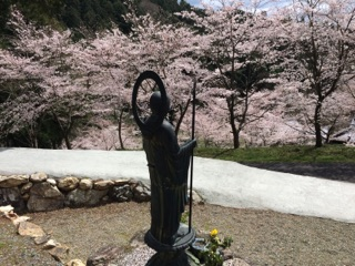 水子さんと桜
